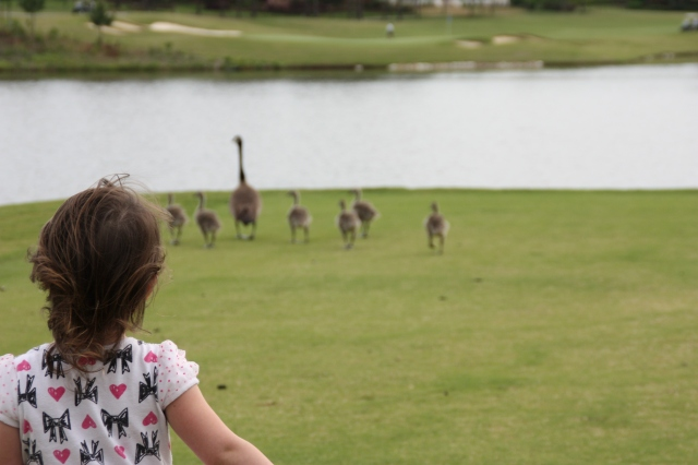 LIFE to the full :) chasing geese on the golf course. Love this fun girl.